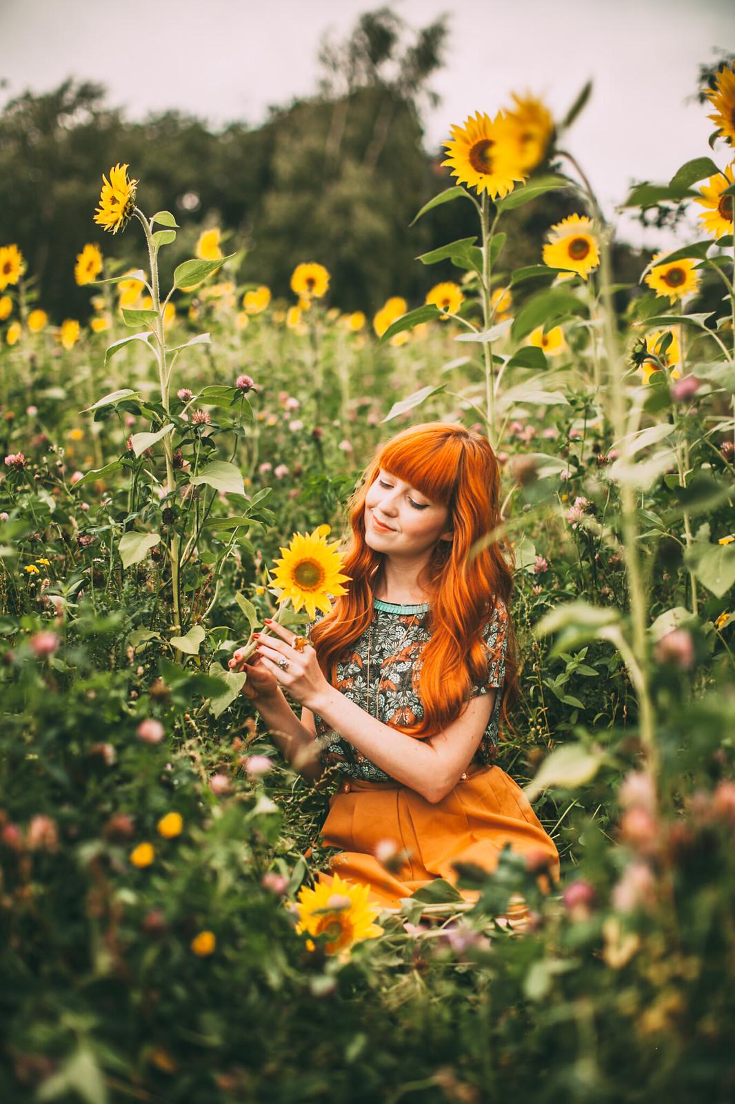 sunflower field-19