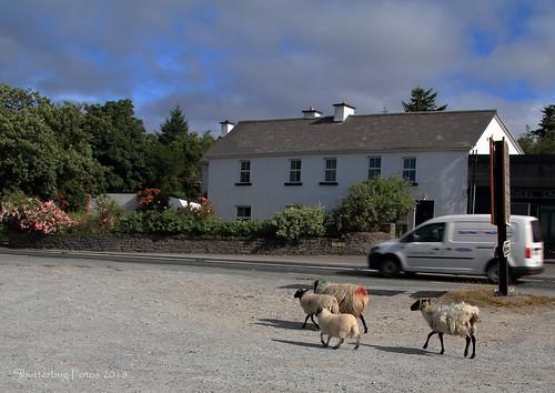 Connemara Traffic