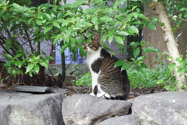 Today's Cat@2018-08-28