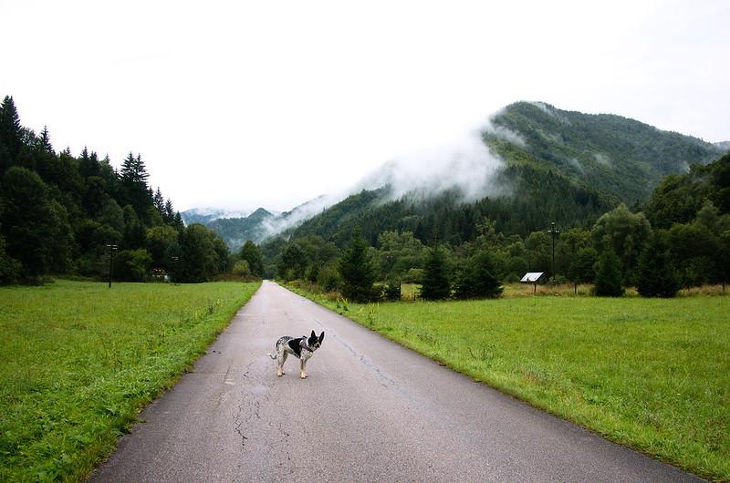 Wielka Fatra pies