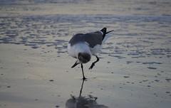 Bird Yoga