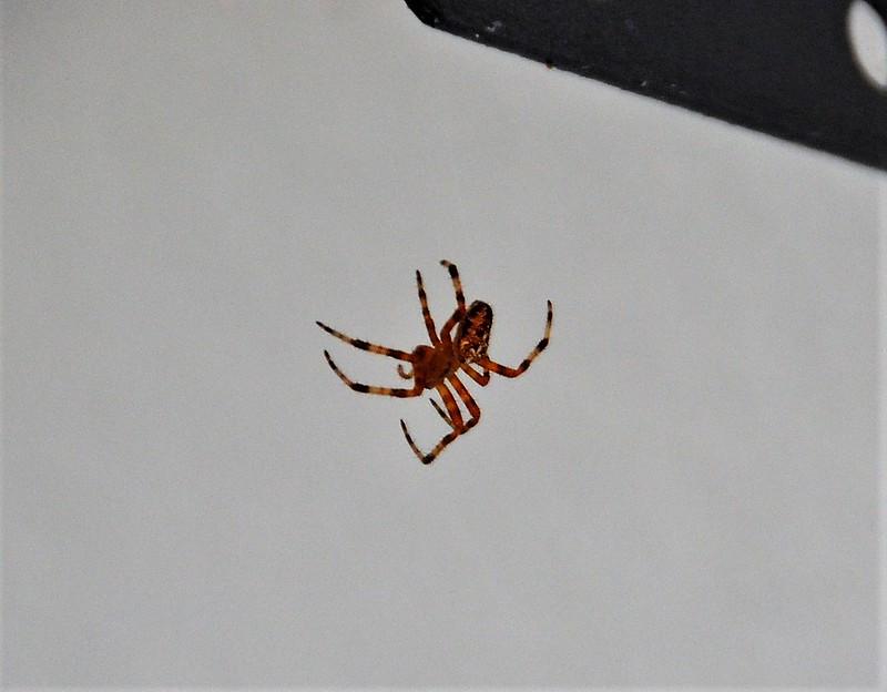 Spider 28.08 (2)