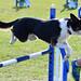 Dog Over Hurdle