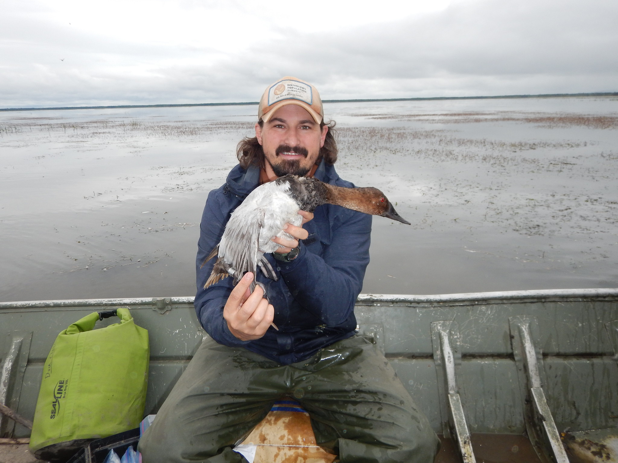 Steve Olson holding the first Canvasback ever banded at the Willow Lake banding station. Photo Credit: Antoine Horassi, USFWS