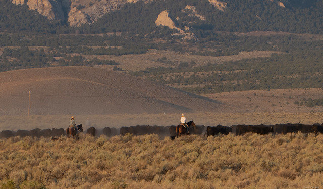 Great Basin Cattle Drive, Panasonic DMC-ZS50