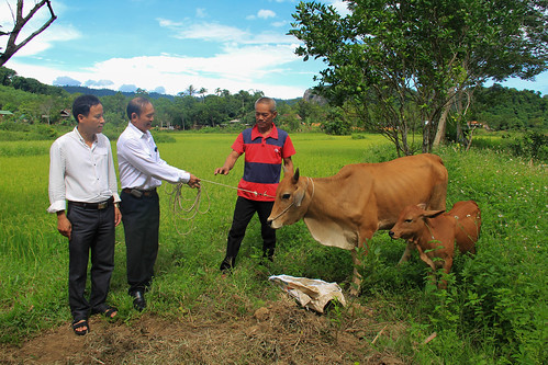 Mr. Hoc (AEPD Outreach Worker) hands over the cow to Mr. Thin