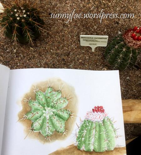 drawing cactus at the zoo