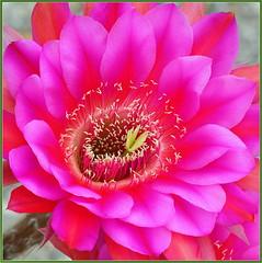 Summer Cactus Color