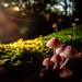 Mushroom season by Pasi Mammela