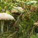 Fungi08