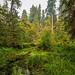 Rain Forest Pond