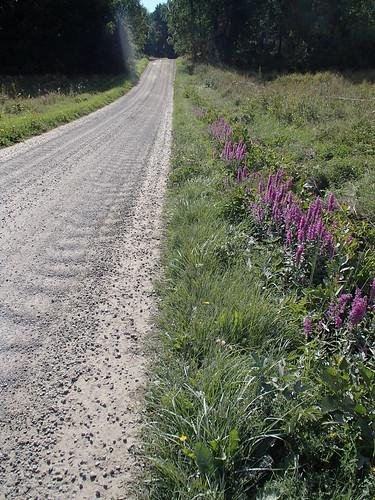 SÖ E53.1 Blomster