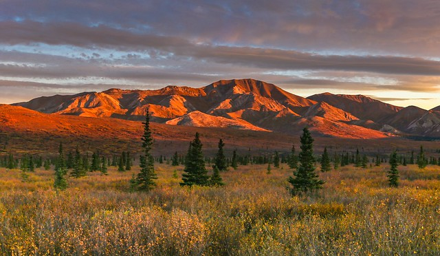 Denali National Park & Preserve