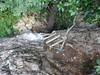 Sur le bloc au-dessus de la traversée du ruisseau : l'échelle encore en place sur l'autre versant