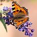 Flutter-visit