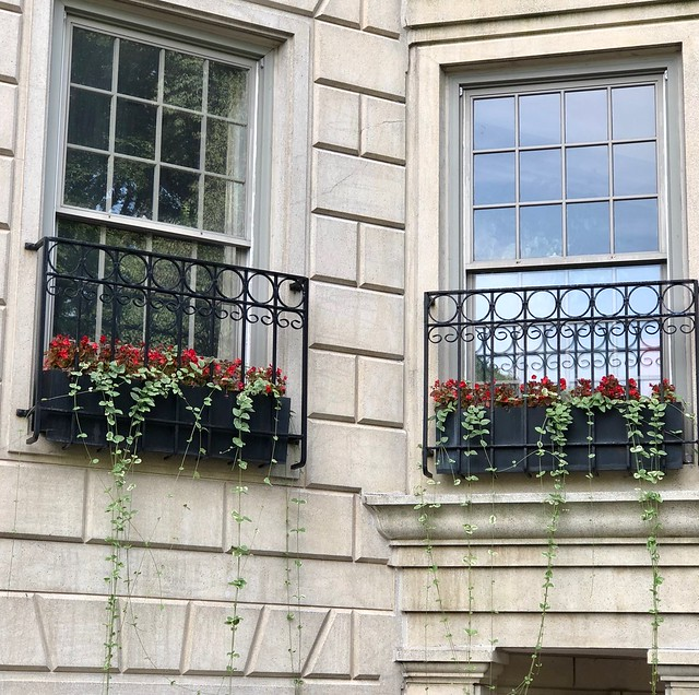 Window Boxes in Boston