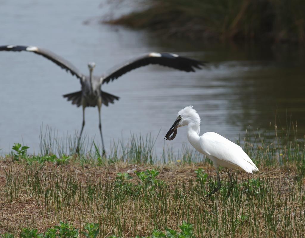 Sortie à la réserve ornithologique du Teich - 24 août 2018 - Page 4 43463819065_e2b45407ab_o
