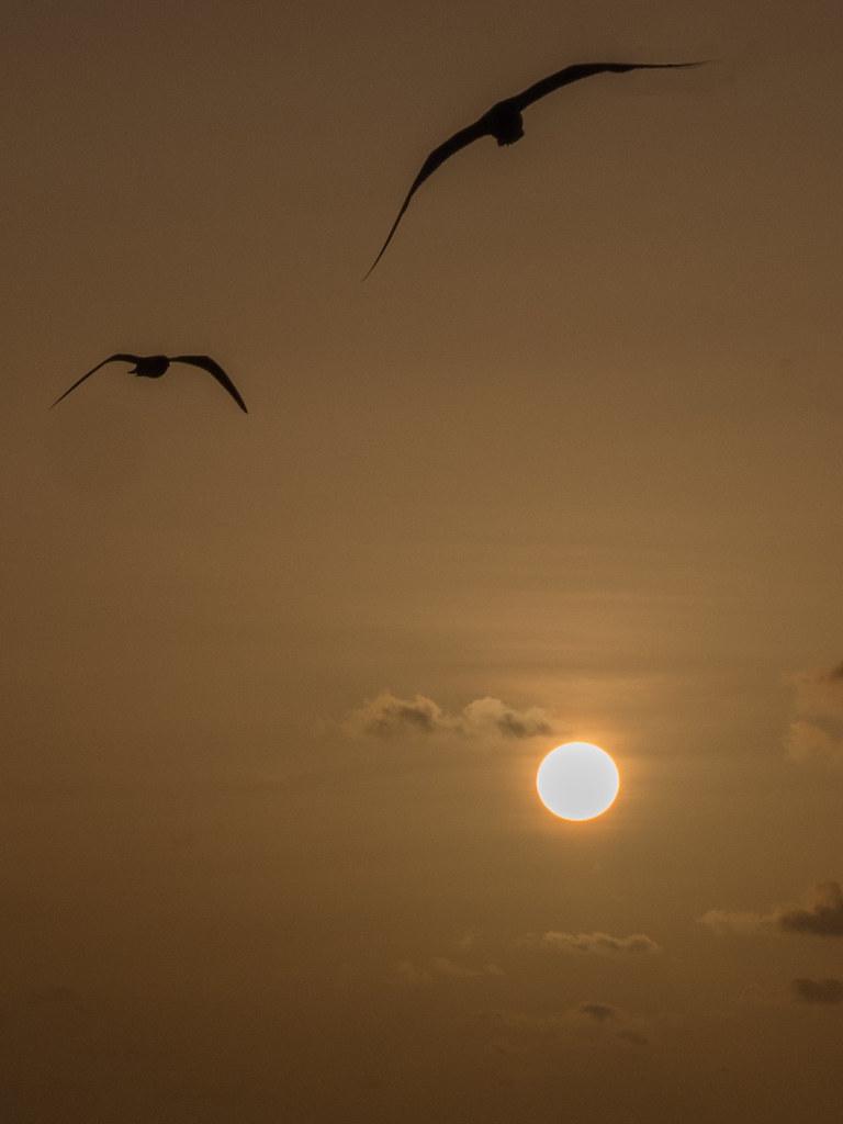 Coucher de soleil à Mayreau... 44099152522_db3185fe83_b