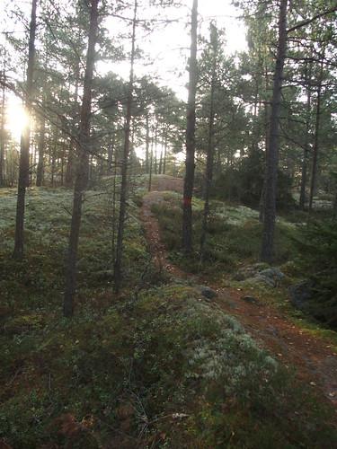 SÖ E50 Skogen
