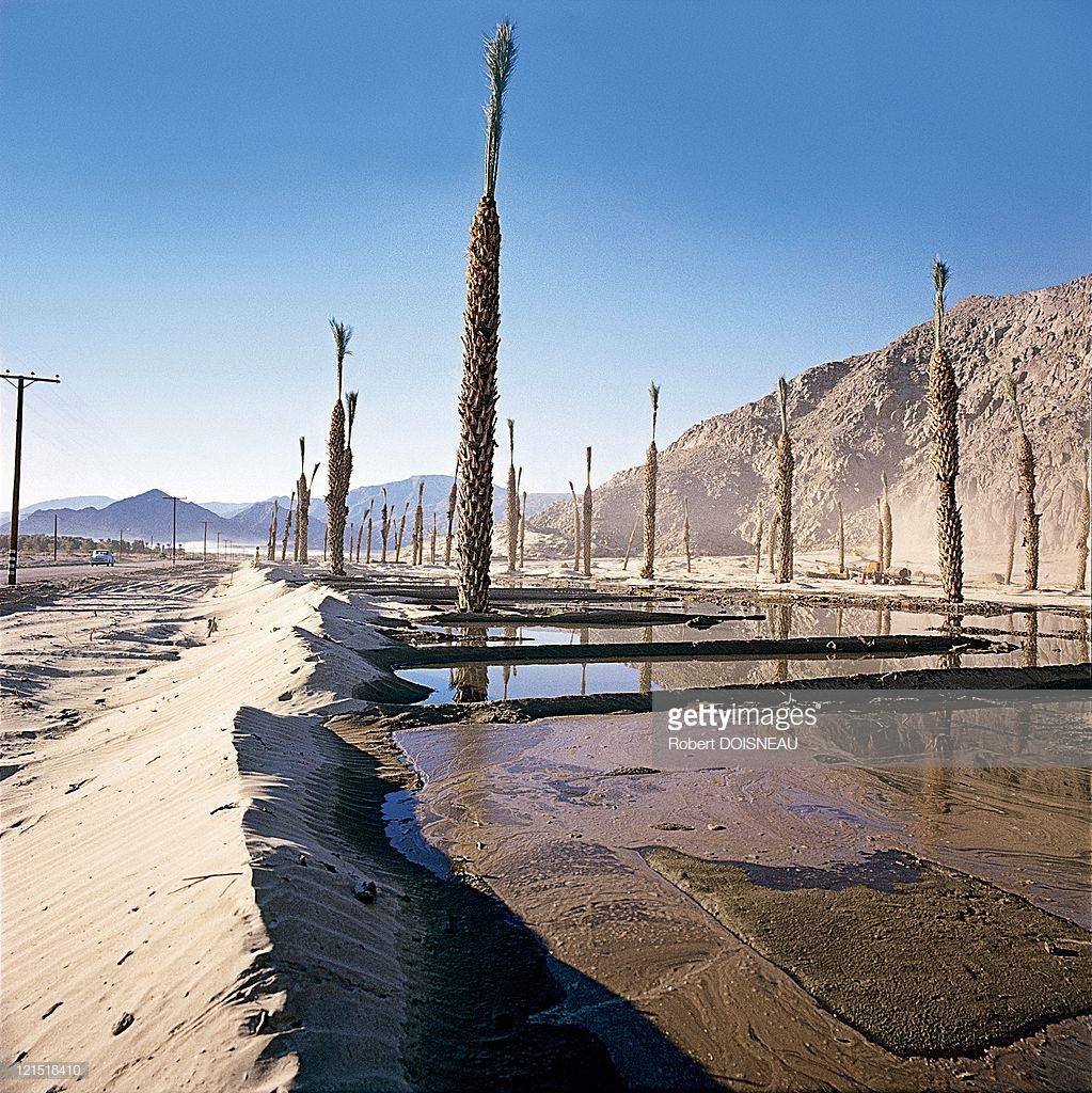 1960. Палм-Спрингс. Вода и песок