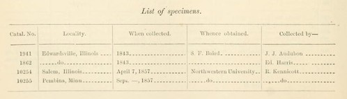 Smithsonian Smith longspur 1858 specimens