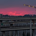 Portland Crane Flying Into The Sunset by John Behrends