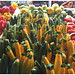 Colours at the Westboro Market