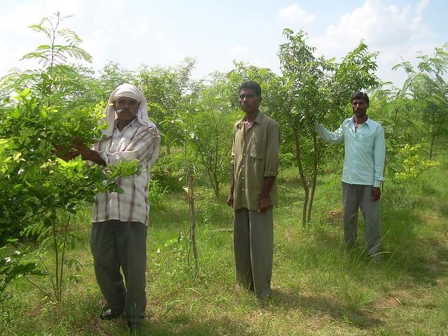 जंगल की देखभाल करते स्थानीय आदिवासी