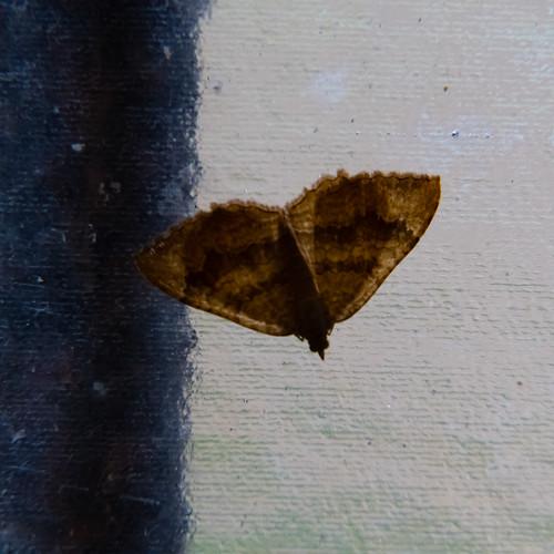 Moth on church porch window