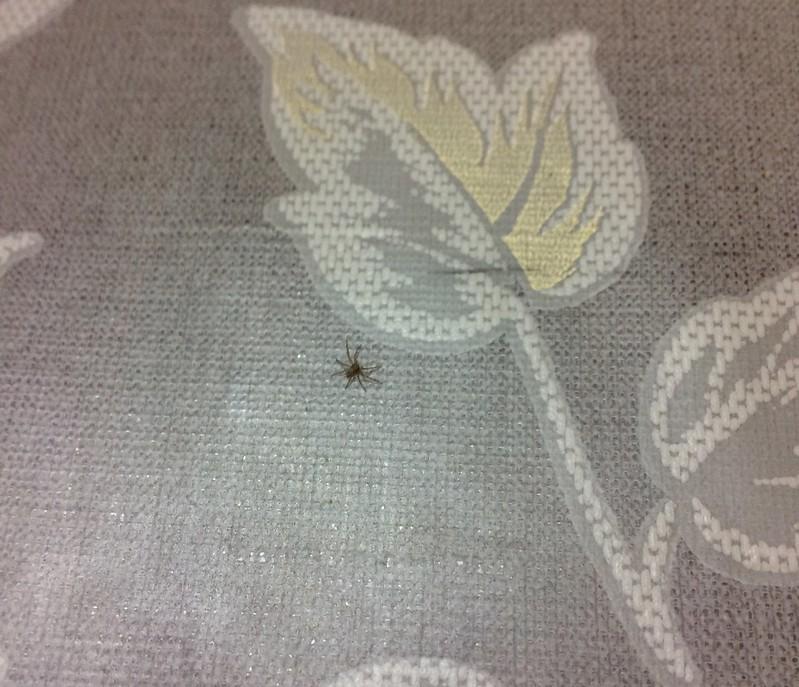 Nano Spider