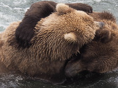 Alaska_BrooksFalls_20180824-145638_PALE7253#