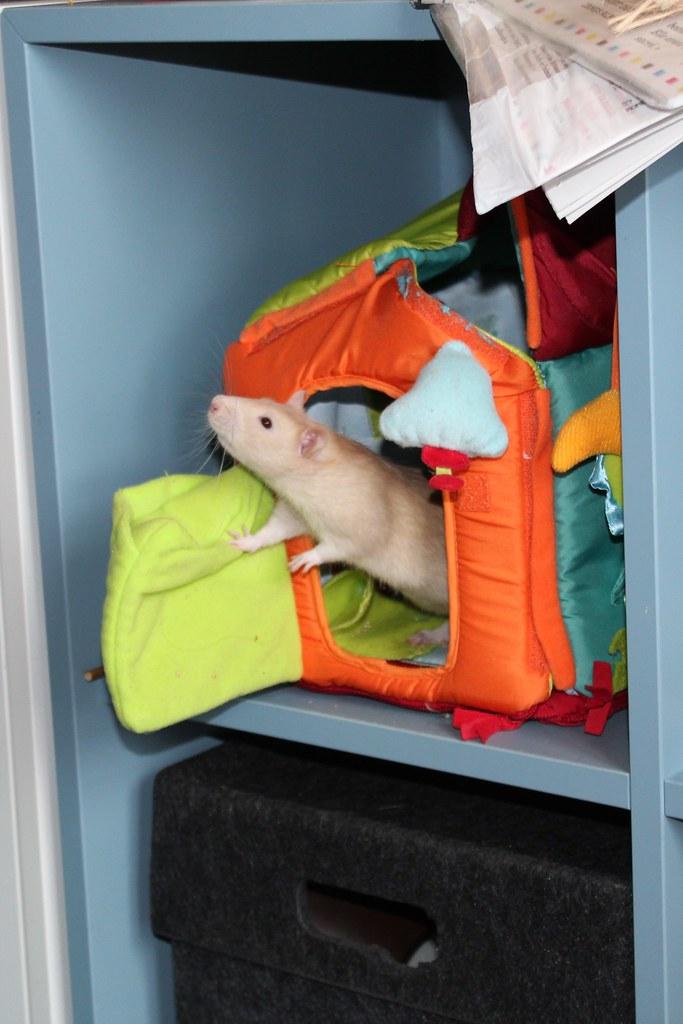 Les ratons dans le vent (la Mollusquerie) - Page 29 42727835670_2a69f1ef69_b