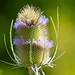 <p><a href=&quot;http://www.flickr.com/people/rjtrixster/&quot;>R.J.Boyd</a> posted a photo:</p>&#xA;&#xA;<p><a href=&quot;http://www.flickr.com/photos/rjtrixster/43441518444/&quot; title=&quot;Bee on Plant 19-07-18 (3)&quot;><img src=&quot;http://farm2.staticflickr.com/1863/43441518444_7cae2cec9d_m.jpg&quot; width=&quot;240&quot; height=&quot;160&quot; alt=&quot;Bee on Plant 19-07-18 (3)&quot; /></a></p>&#xA;&#xA;