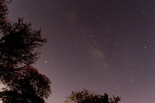 d5600 nikon tamron 16300 milkyway sky stars trees