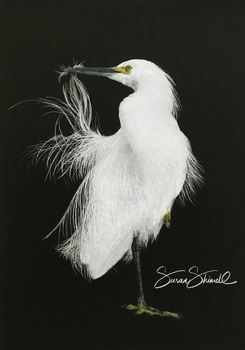 Snowy Egret | by Susan Shimeld - Nature in Fine Art