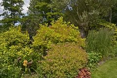 2018.06.20.075 CASTILLON - Les jardins, allée des fleurs