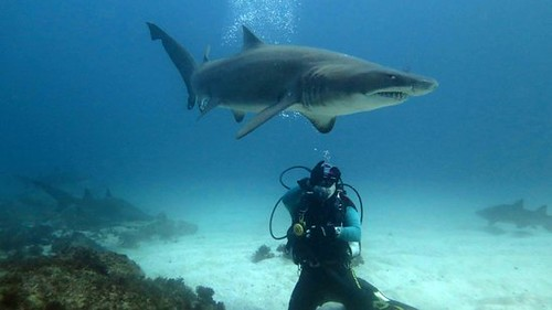 8 Day Shipwreck and Shark Diving Tour