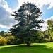Treerific
