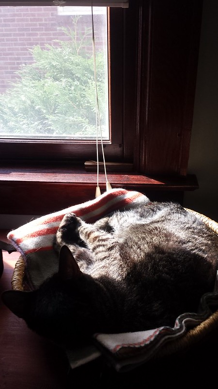 Sunbeam nap