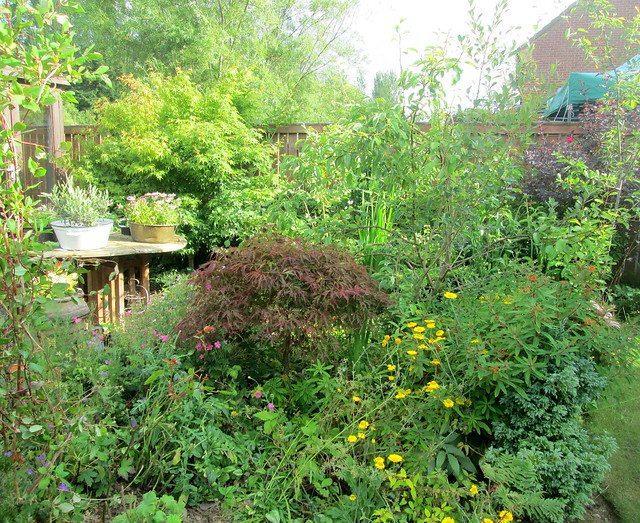 garden , acer