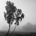 Im Nebel 02 sw