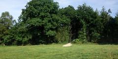 Le « Menhir de Talvé » près de Pluherlin - Morbihan - Août 2018 - 01