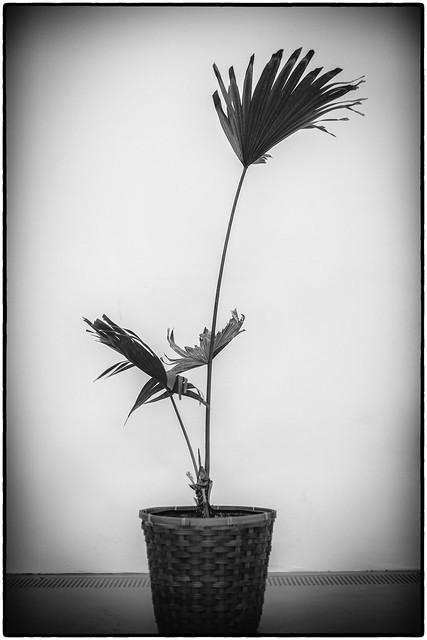 Flourish 2