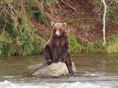 Alaska_BrooksFalls_20180824-154912_PALE7725#