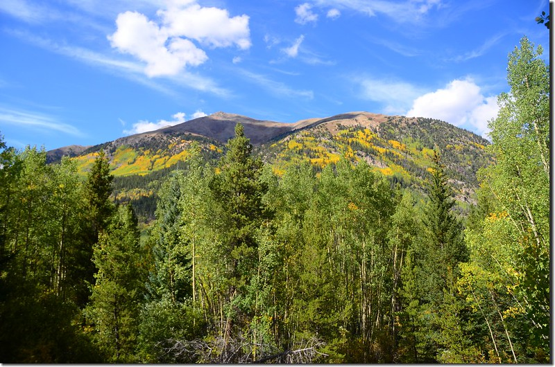 Aspen leaves have already turned golden yellow along the trail (4)