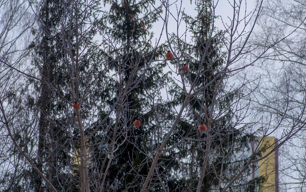 История гнезда. Соседи.