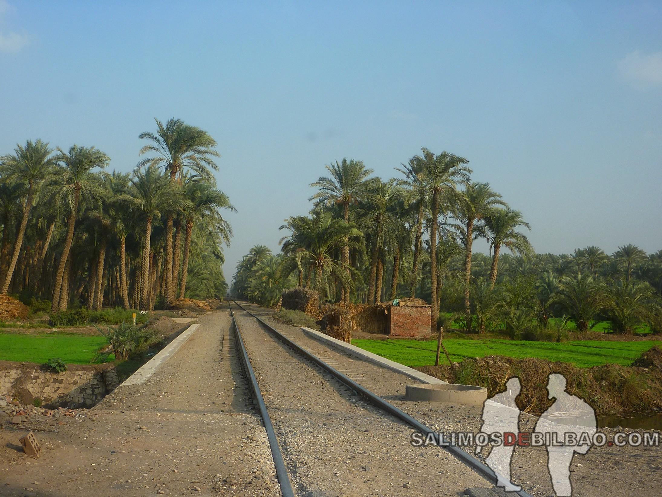 0205. Carretera de Pirámides a Saqqara