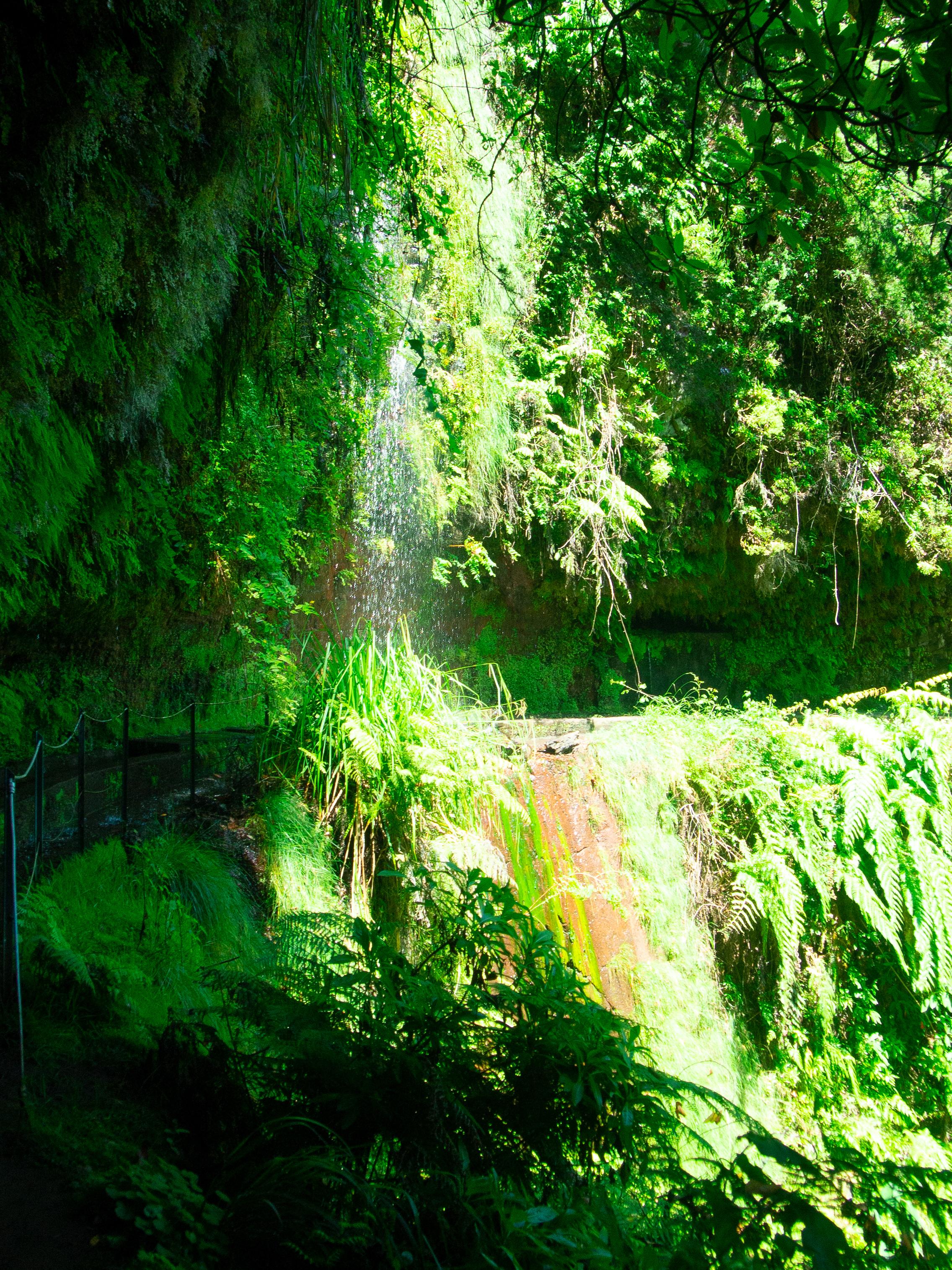 King's Levada Madeira12