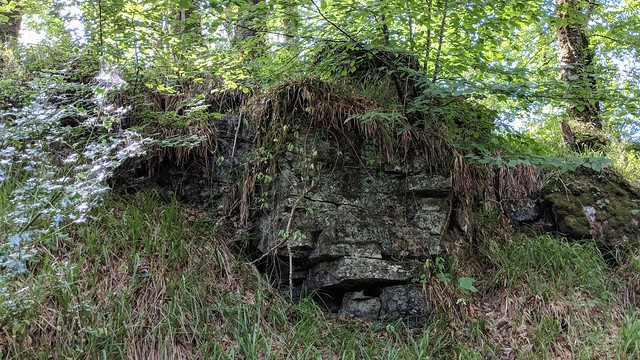 'Buckland Lodge Tor'