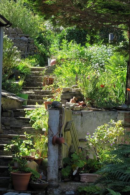 Stromness Garden IMG_0185